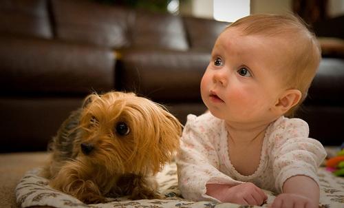 bebek-olan-evde-hayvan-beslemek-dogrumudur